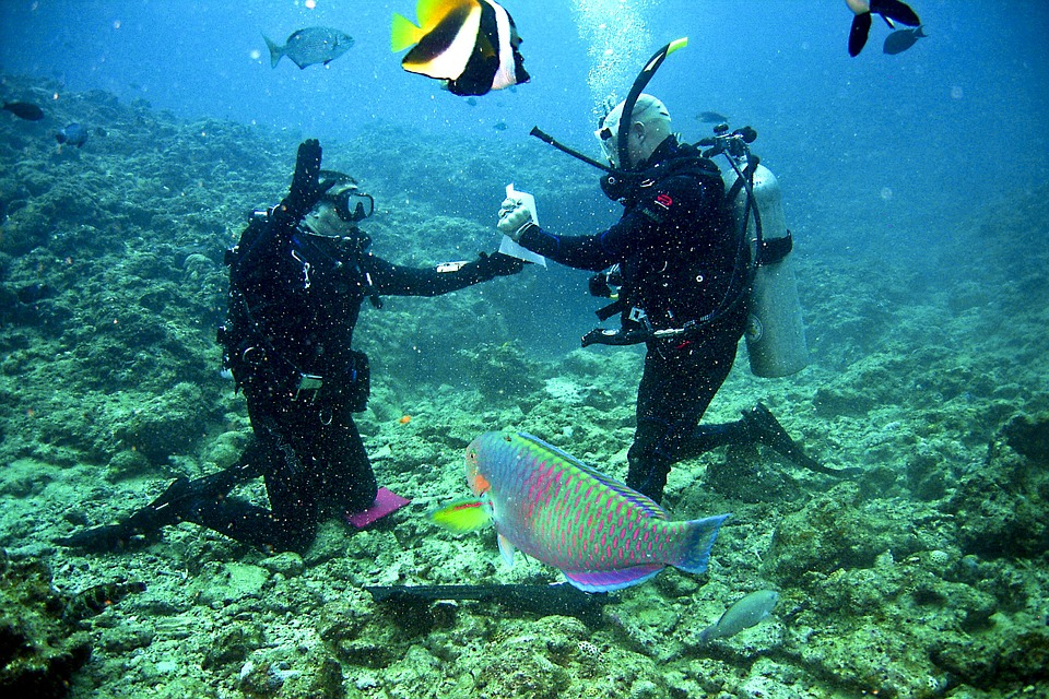Scuba diving proposal one of the 6 best extreme marriage proposals pixabay royalty free image