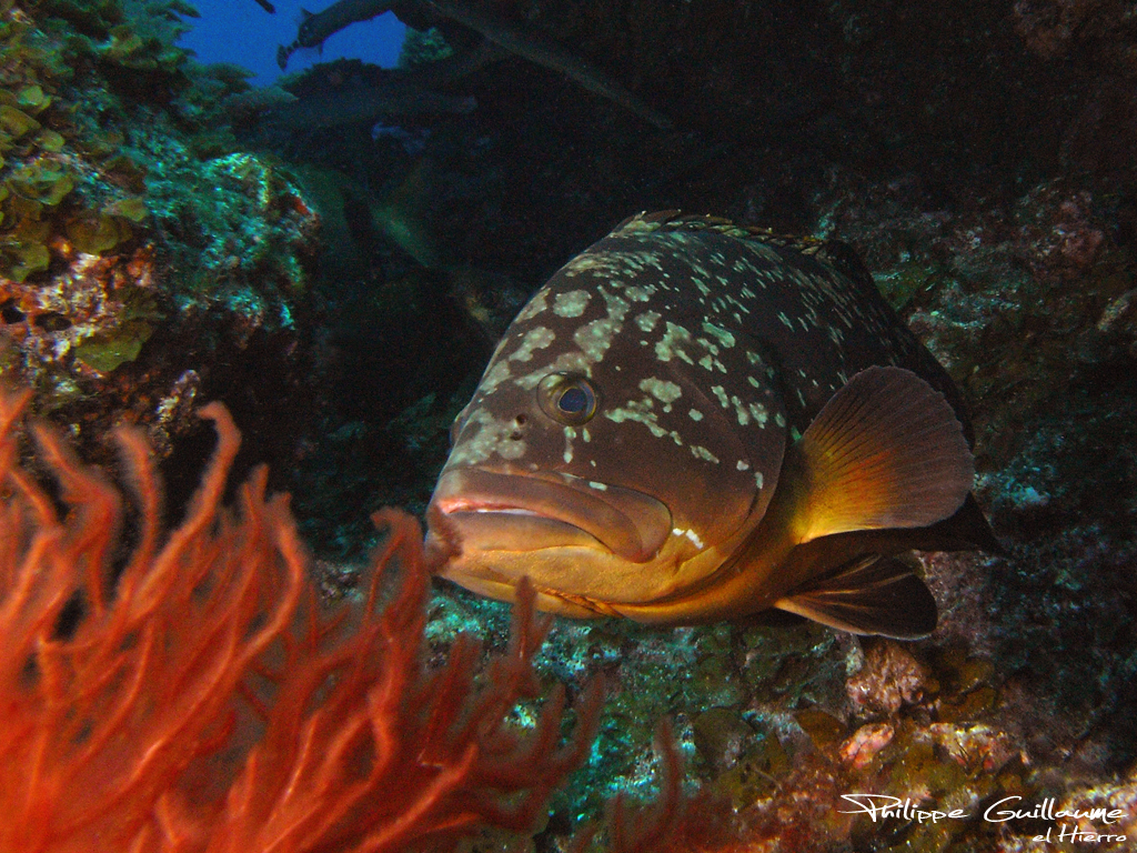 Guide to activities in the Canaries Scuba diving El Hierro Flickr CC image by Philippe Guillaume
