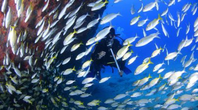 best scuba diving holiday destinations Royalty free image by pikist