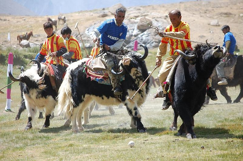 Introducing yak polo Adventure sports you've never heard of Wikimedia CC image by Ali Zia