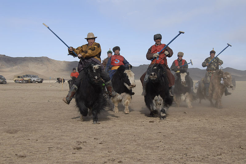 Introducing yak polo in central Mongolia Adventure sports you've never heard of Wikipedia CC image by Carl Whetham