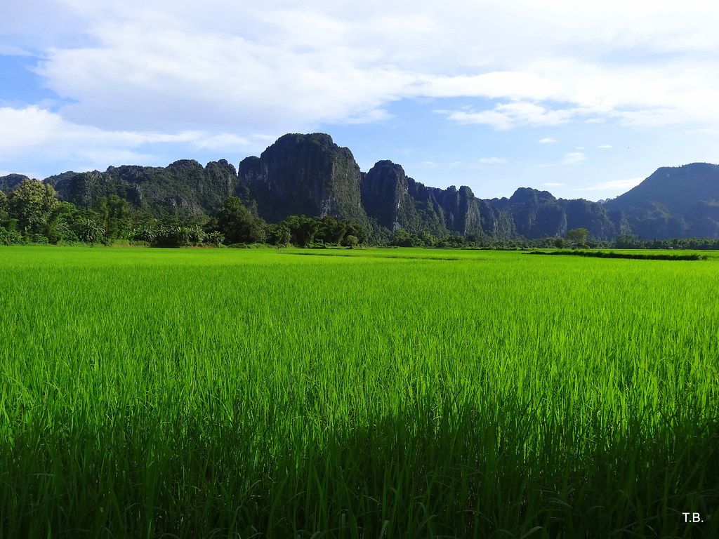 Rice paddy in Laos Flickr CC image by tballandras