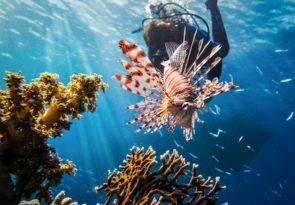 Is it the Red Sea or Dead Sea pixabay royalty free image of red sea lion fish