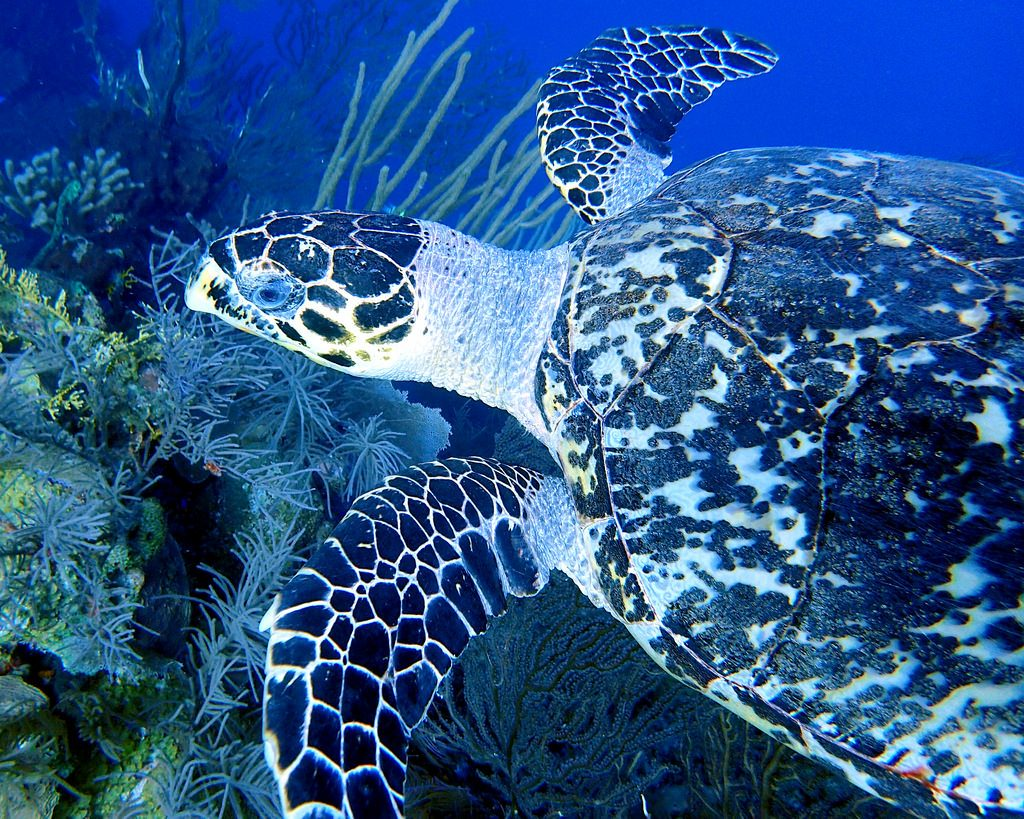 West Indies scuba diving holidays belize one of the best Caribbean dive sites Flickr image by Mastrfshrmn