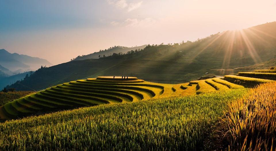 Vietnamese overlanding holidays rice paddies Pixabay royalty free image