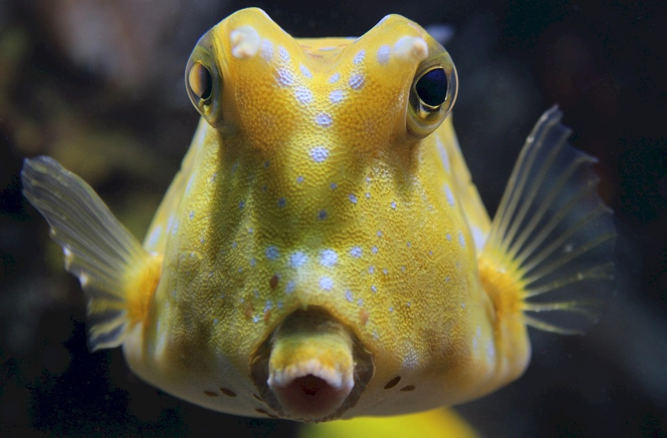 Guide to liveaboard dive holidays Why we love the scuba diving boat life longhorn cowfish pixabay royalty free image