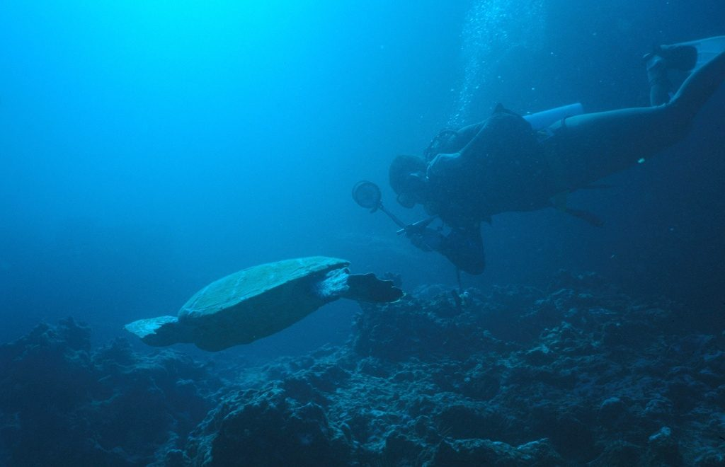 Turtle Guide to Galapagos Islands scuba diving holidays Flickr CC image by Derek Keats