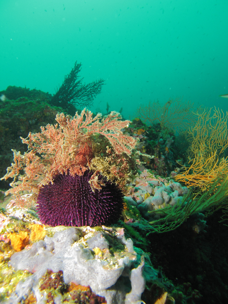 French fine diving Best France scuba dive sites near Marseille Flickr CC image by Arn@ud Ab@die