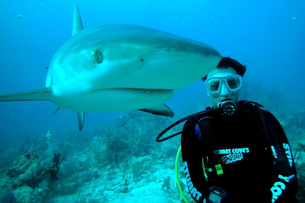 Scuba dive with sharks in Bahamas one of the 10 best shark diving spots worldwide flickr CC image by manoellemos