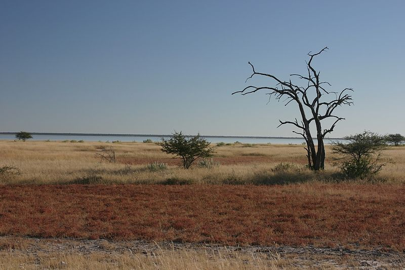 Africa overland holidays Wikimedia image by Dr. Thomas Wagner