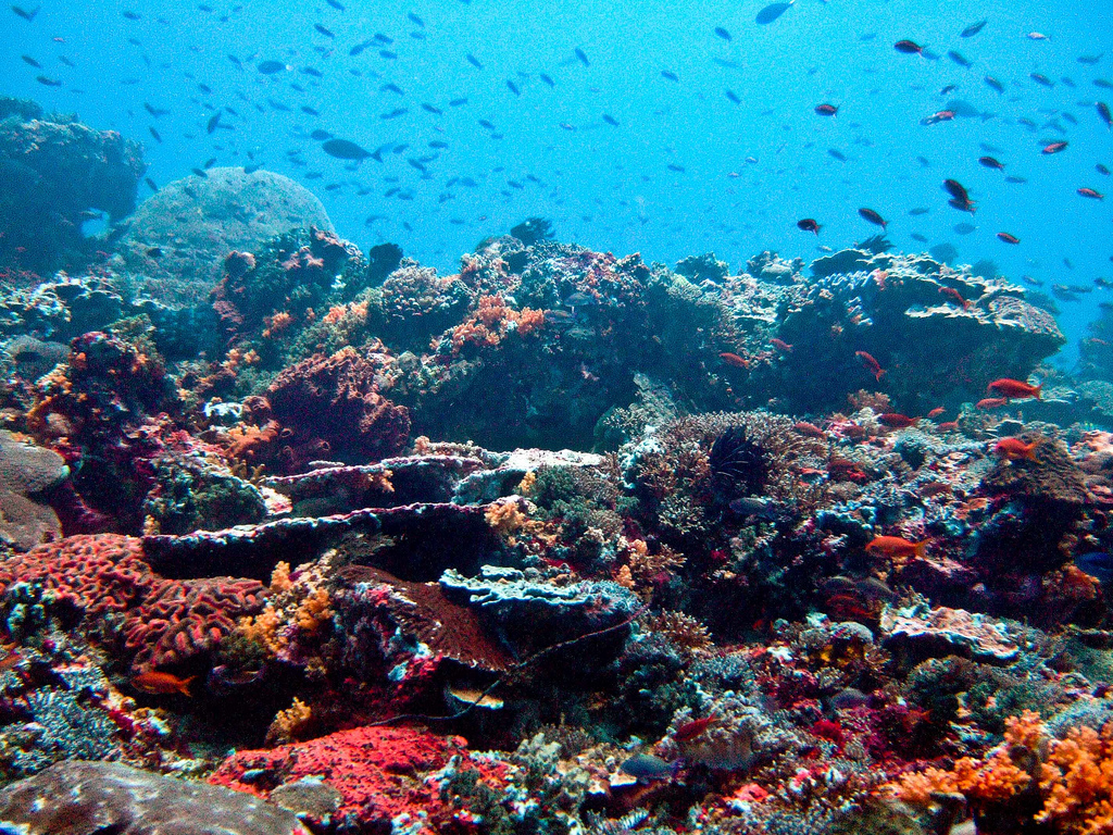Best South East Asian scuba diving holidays flickr image by Ilse Reijs and Jan-Noud Hutten