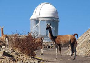 Guanacos on road in Atacama in Peru wikimedia CC image by E Matamoros ESO