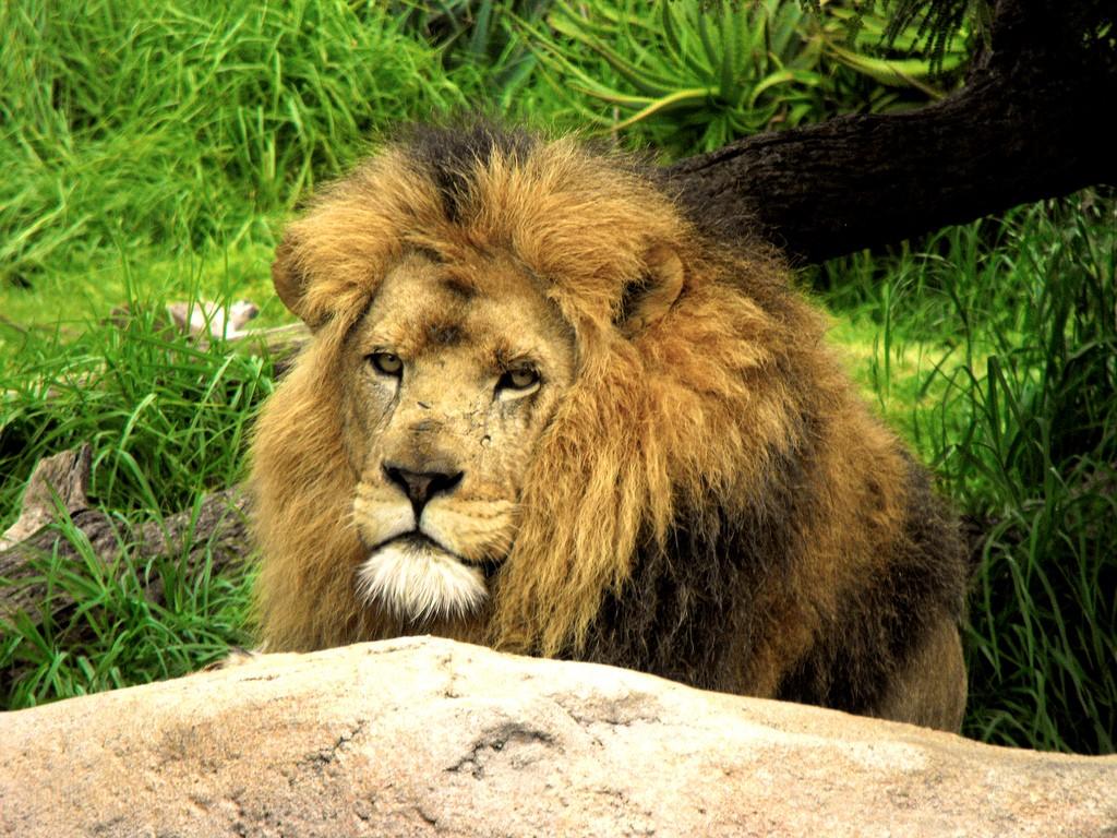 Kenya one of the 11 best safari holiday destinations worldwide flickr image by Yagan Kiely