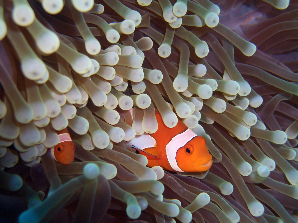 South East Asia scuba diving Holidays flickr image by CybersamX