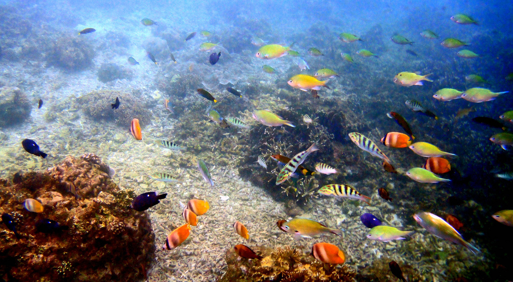 South East Asia scuba diving holidays flickr image by gareth1953 Got My Bus Pass Now