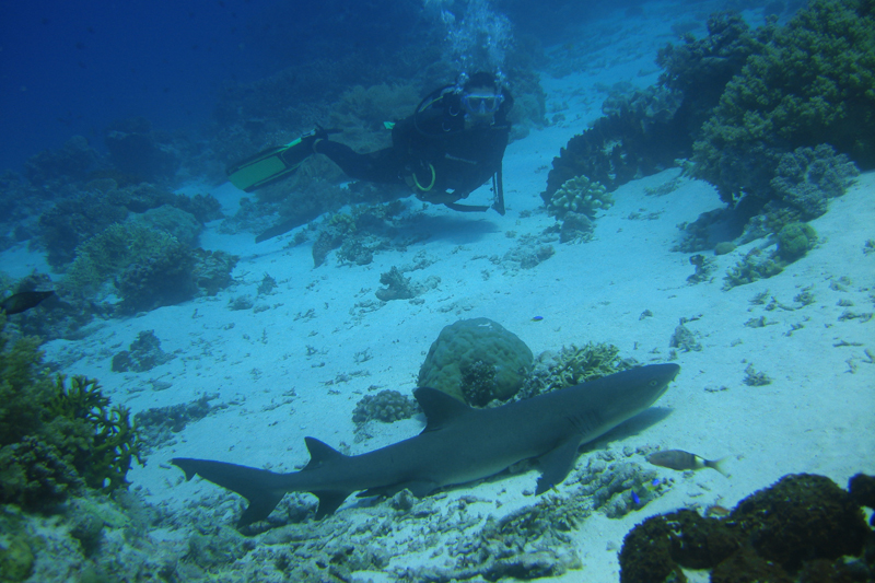 Moalboal Scuba Diving Holidays blacktip shark image courtesy of Lee Butler from Savedra Dive Center Philippines