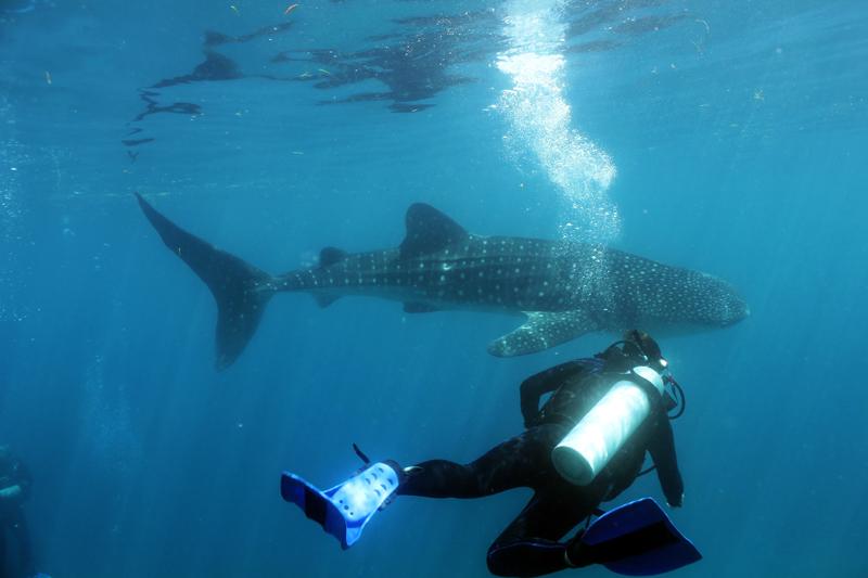 Best Philippines dive spots