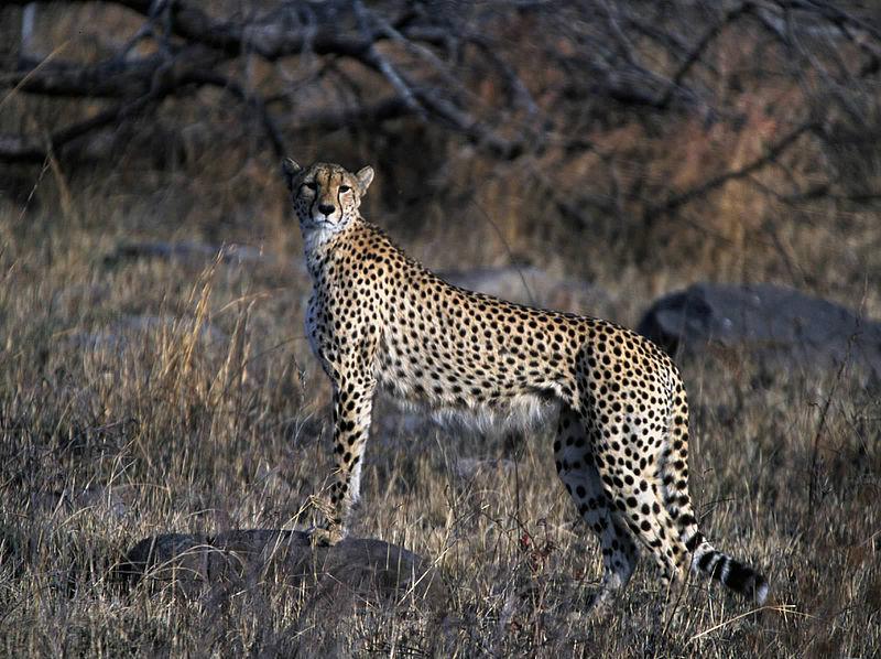 South Africa safari adventure Wikimedia image by Godot13