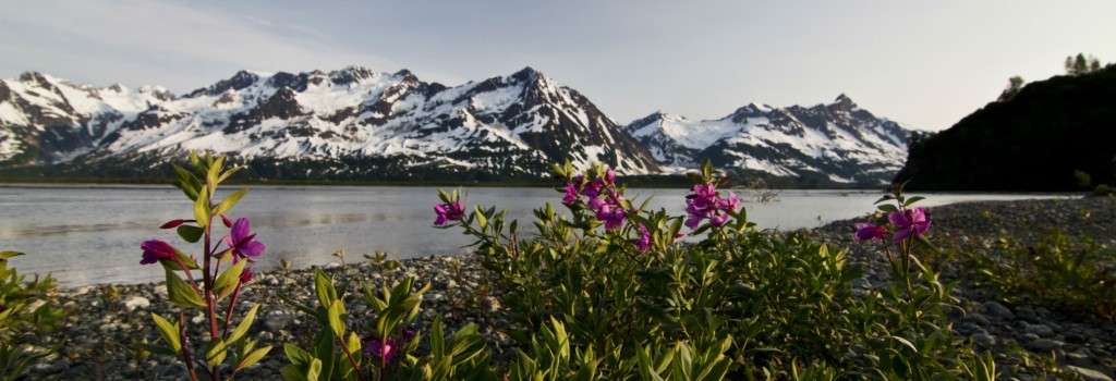 Tatshenshini River rafting expedition Fireweed on Tatshenshini - Simon Gee