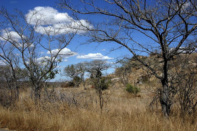 Top 10 African safari destinations Wikimedia image bny Amada44