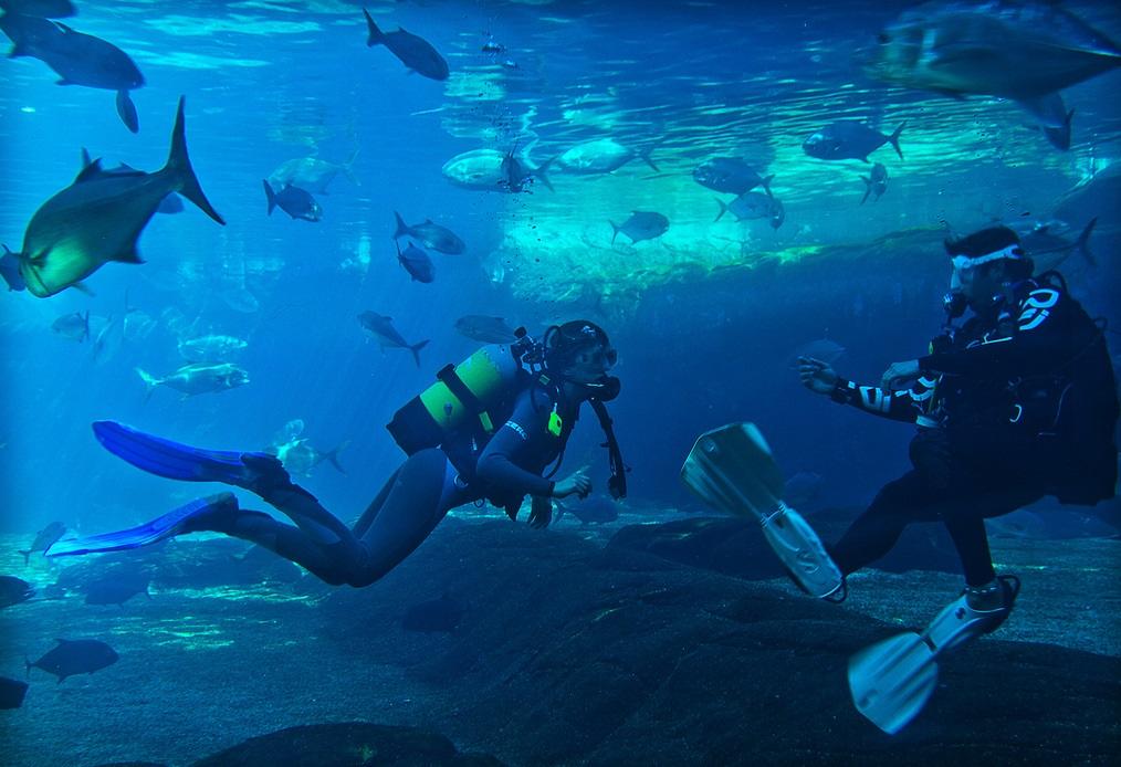 Africa Scuba Diving Flickr Image by Helmut Schwarzer