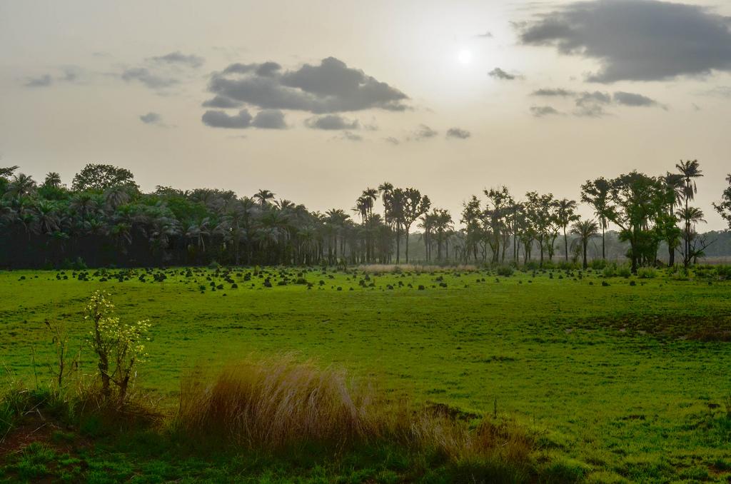 Guinea Bissau Safari Adventure Holidays Flickr image by jbdodane