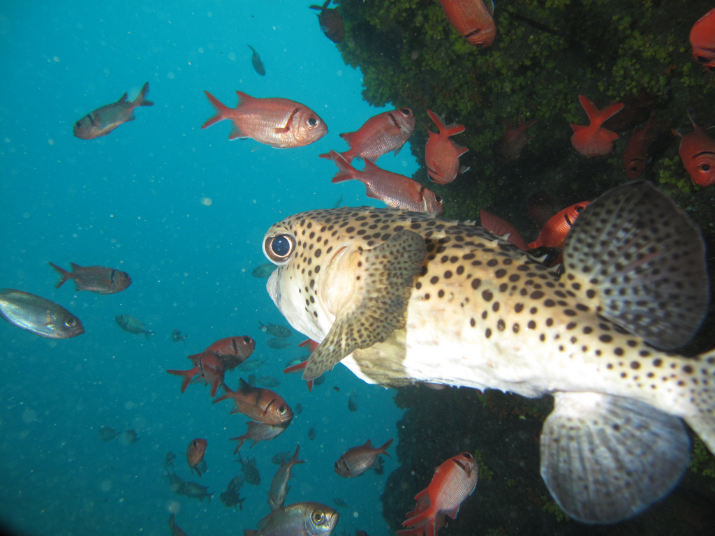 cape verde scuba diving flickr image by F H Mira