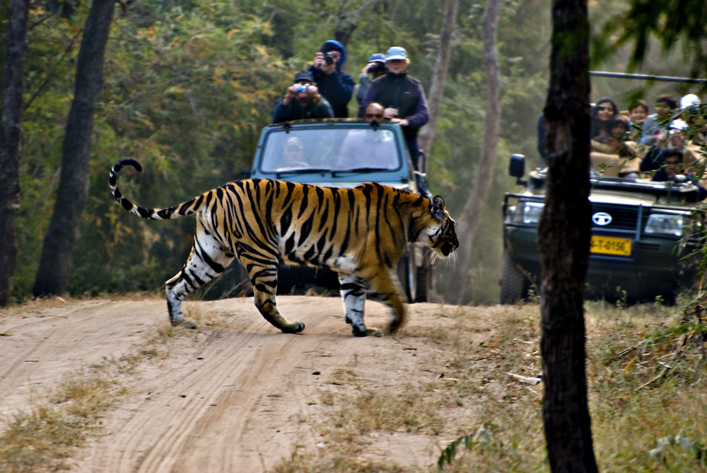Luxury India adventure holidaysvs cheap Indian adventures Flickr CC Image by RobRyb