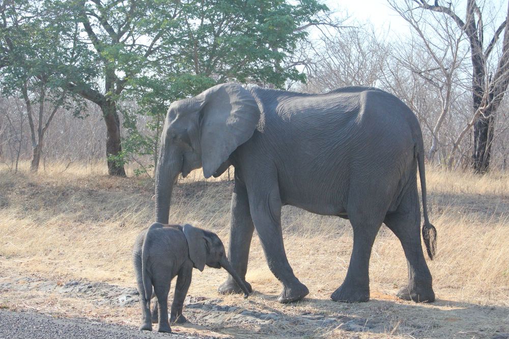 Is it safe to go on safari in Zimbabwe?