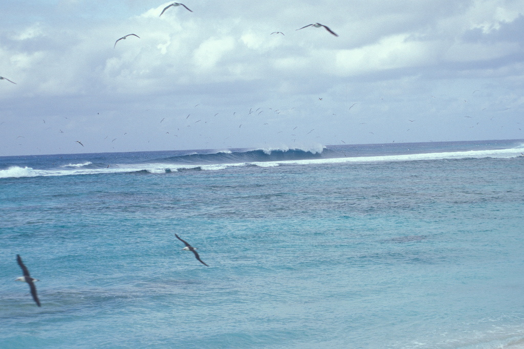 Midway Islands Surfing Flickr image by Starr Environmental