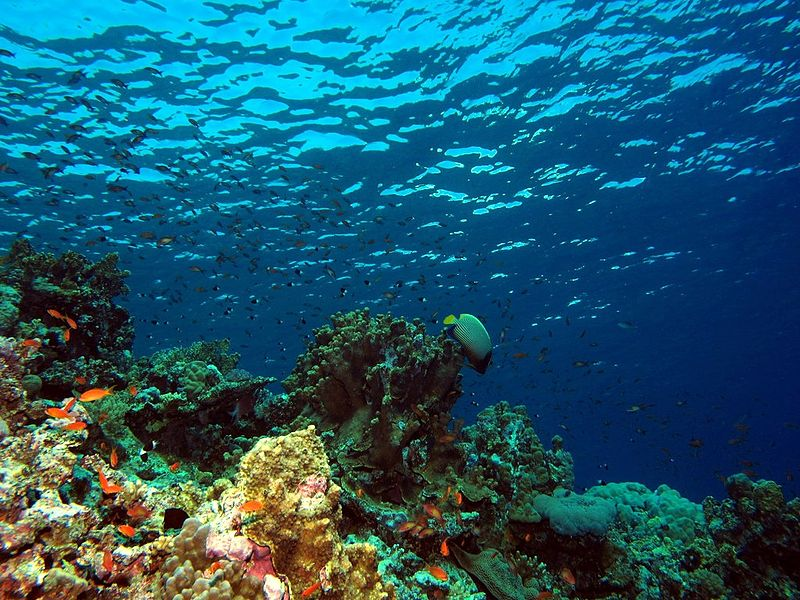 Red Sea live aboard scuba diving holidays Wikimedia image by Dereck Keats