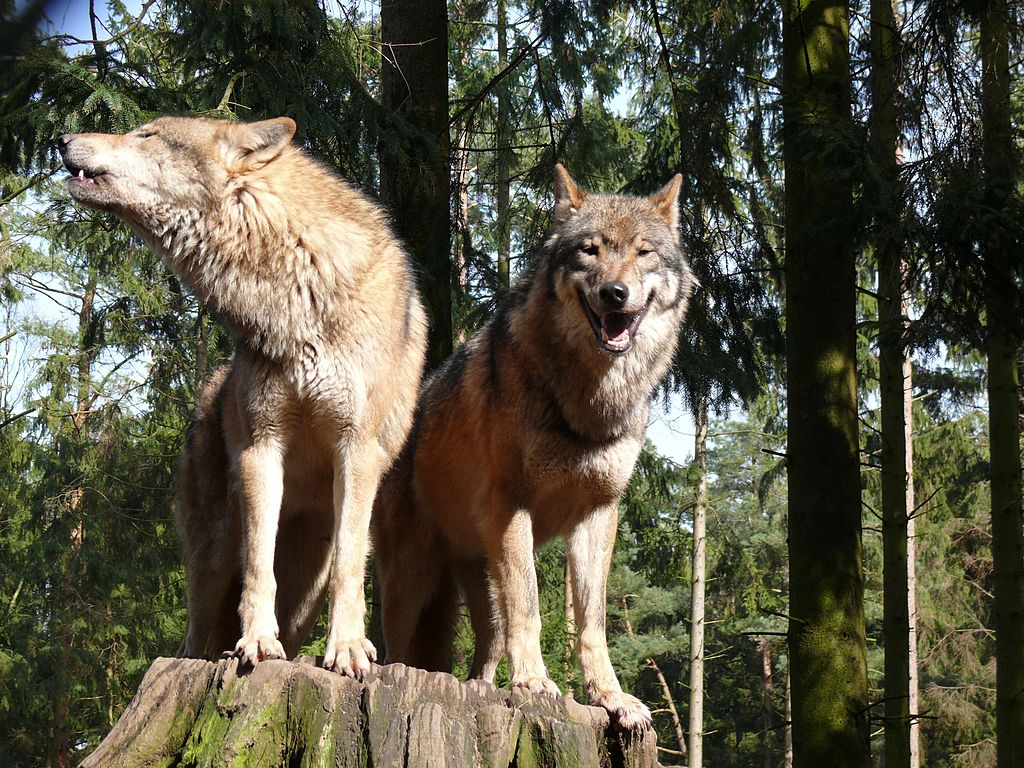 Romania Safari holidays and wildlife adventures Wikimedia Commons image by Gunnar Ries