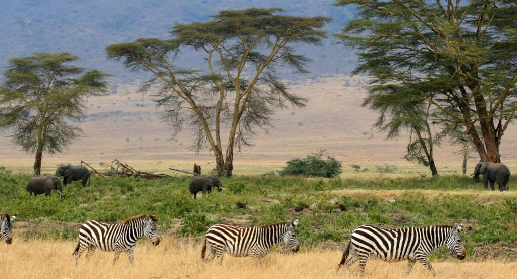 Somalia Safari Wikimedia Commons image by Gary
