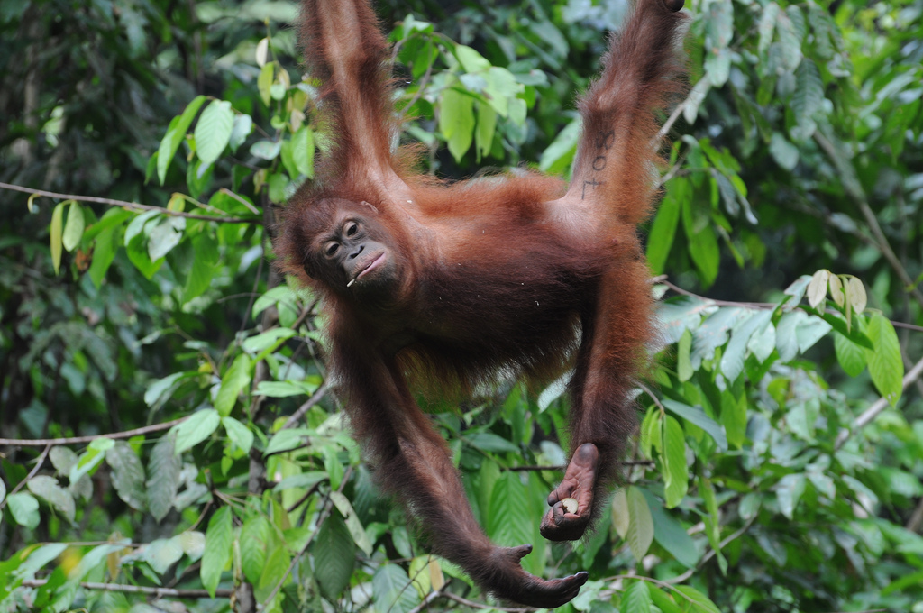 Malaysian Borneo overland adventures flickr image by oldandsolo