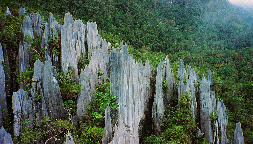 Malaysian Borneo trekking holidays. The Pinnacles flickr image by paulwhitepics