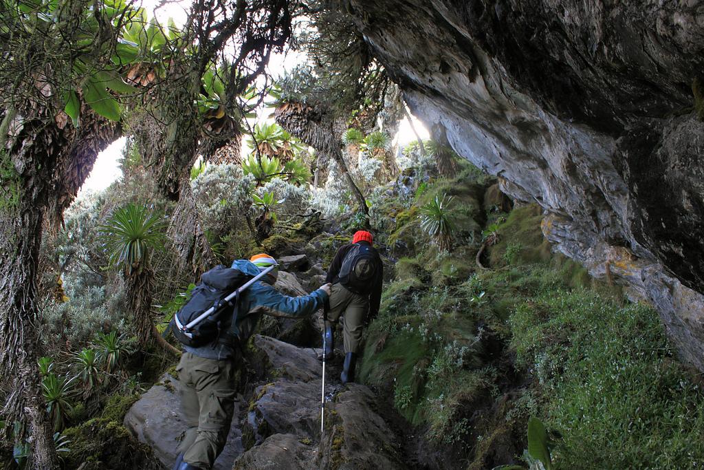 best East Africa Trekking holidays Rwenzori Mountains. Flickr image by Jørn Eriksson