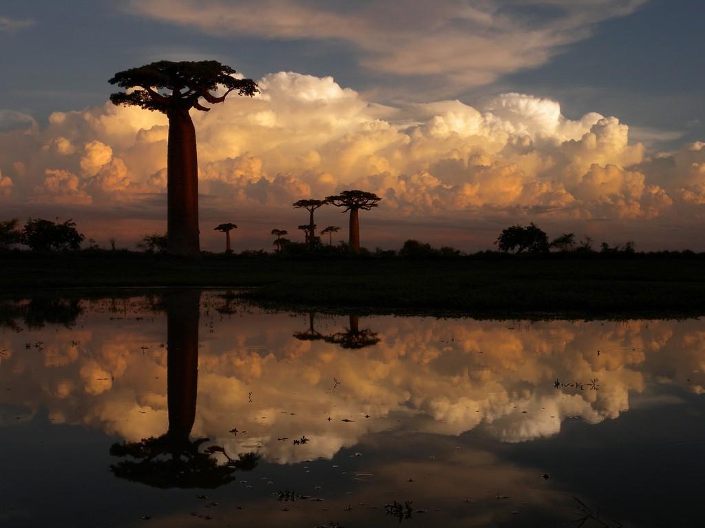 Madagascar trekking holidays in Baobab Trees Flickr Image by Frank Vassen