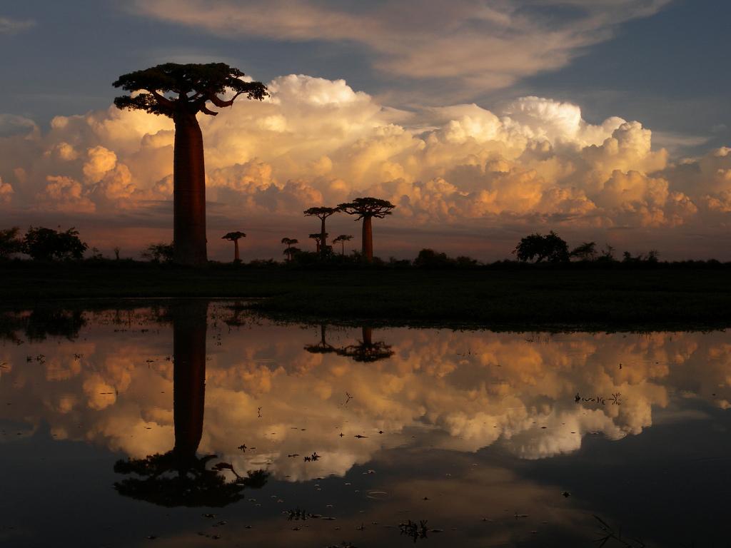 Madagascar Safari Holidays Boabab Trees Flickr Image by Frank Vassen