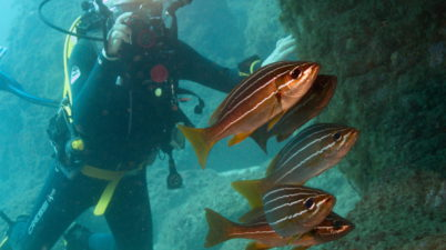 Guide to scuba Diving in the Canaries. Photo by Brian Goldthorpe Davy Jones Diving Gran Canaria