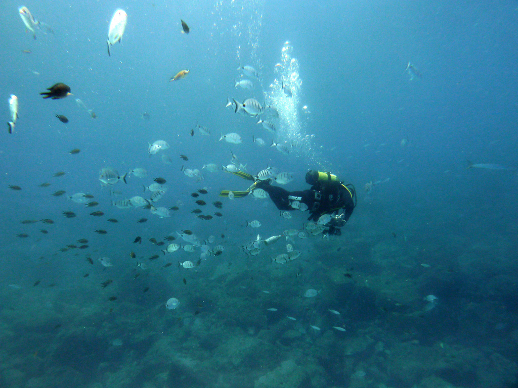 Scuba diving in the Canary Islands flickr image by Lostajy