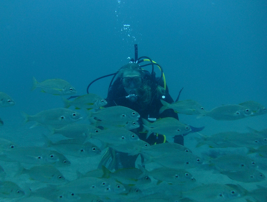 Scuba diving in the Canary Islands flickr image by Neil Rickards
