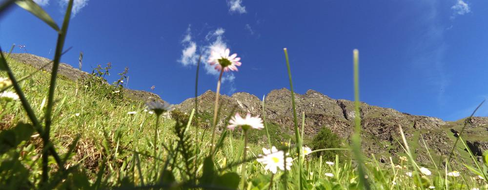 Ischgl trekking review - flowering meadows