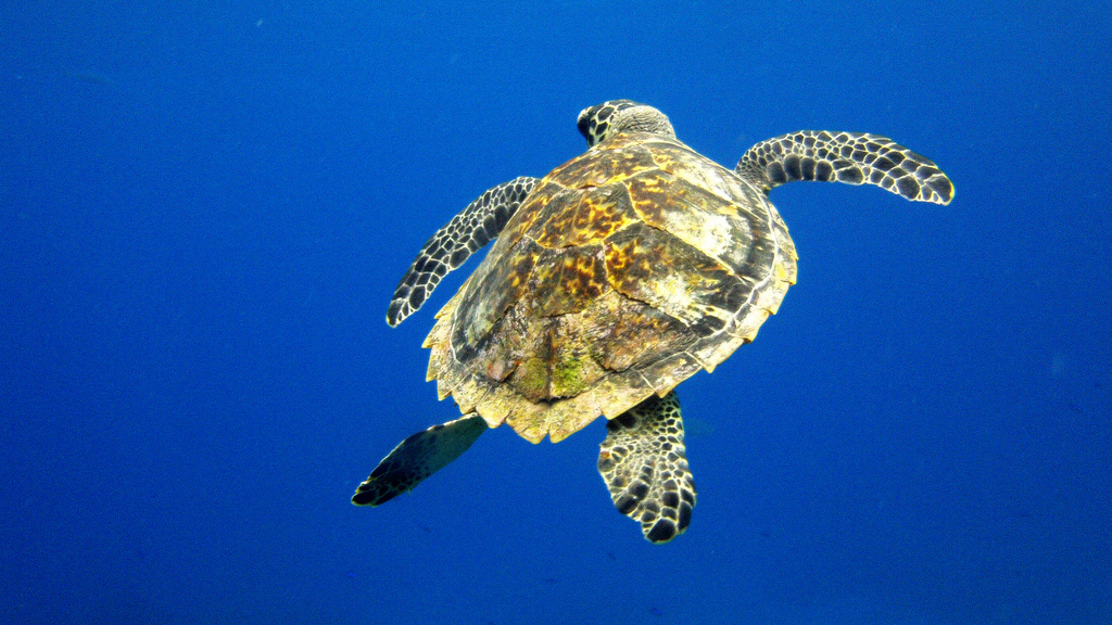 Scuba diving holidays in Mexico flickr image by Serge Melki
