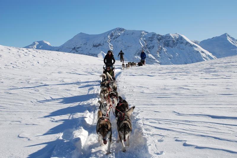 Husky Sledding dogs Undiscovered Alps 1258
