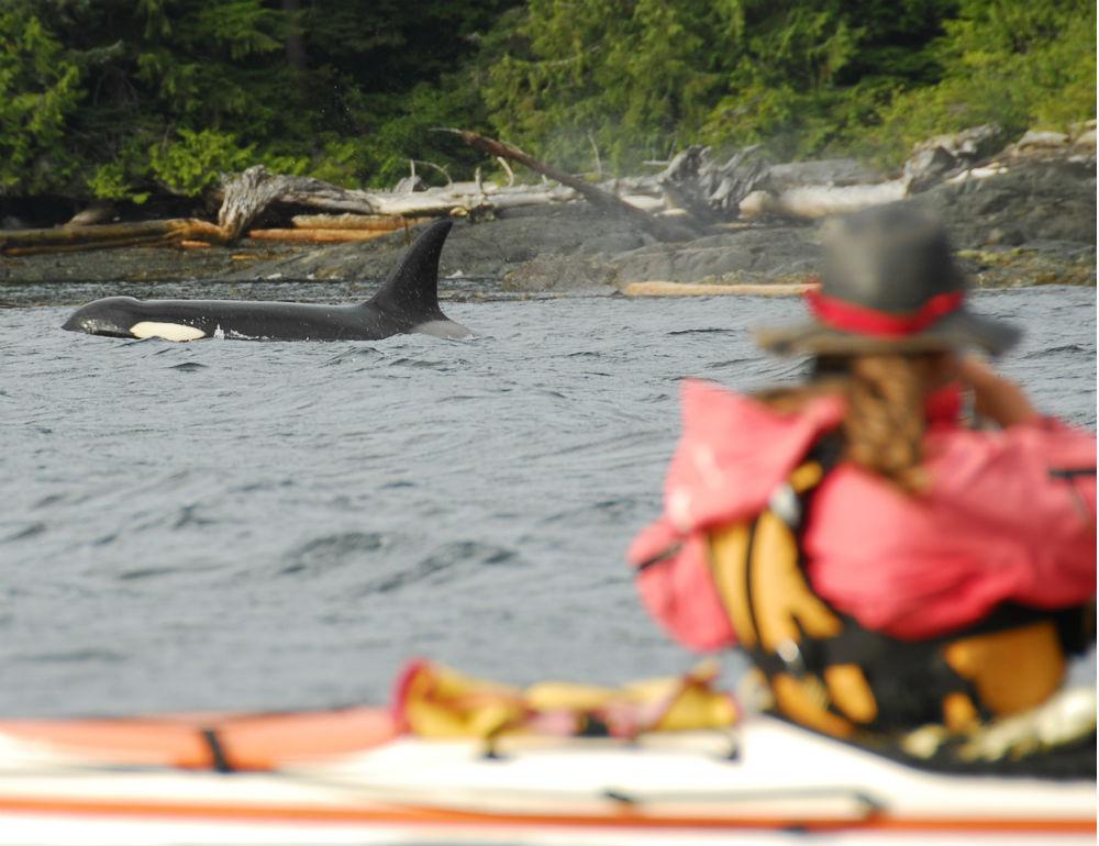 Wilderness Kayaking Holidays: Image courtesy of Spirit of the West Adventures
