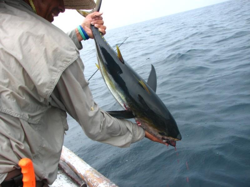 Panama Real Paradise Discount: 10% off fishing