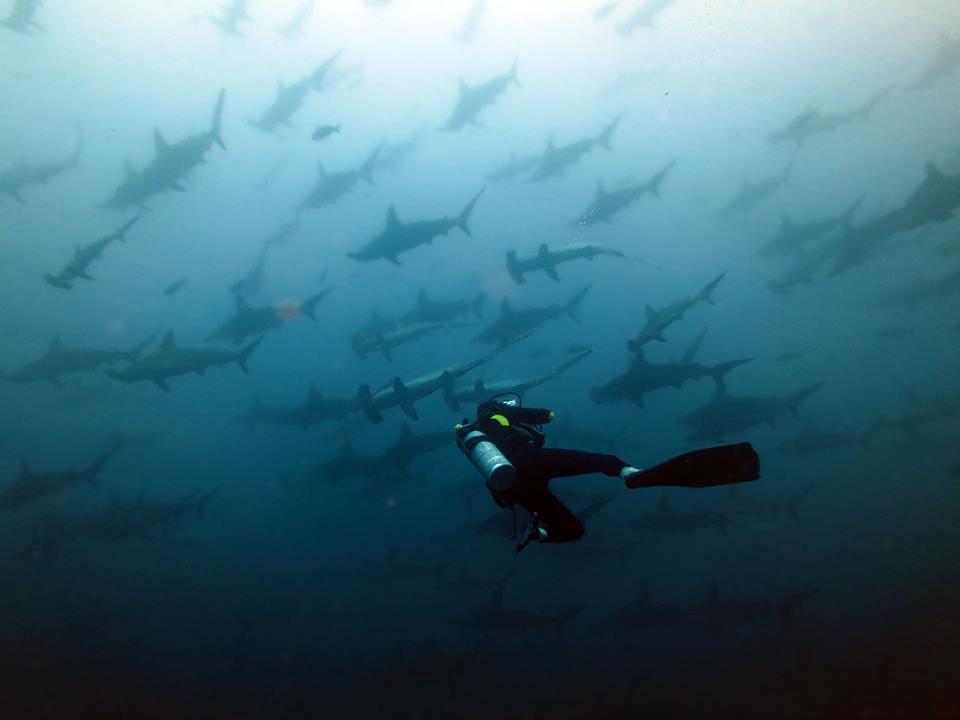 Coiba Dive Expeditions Discount: 10% off Scuba Diving