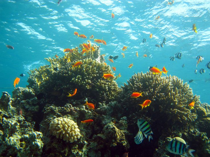 Above and Below Adventures Discount: 20% off Jordan Scuba Diving holidays