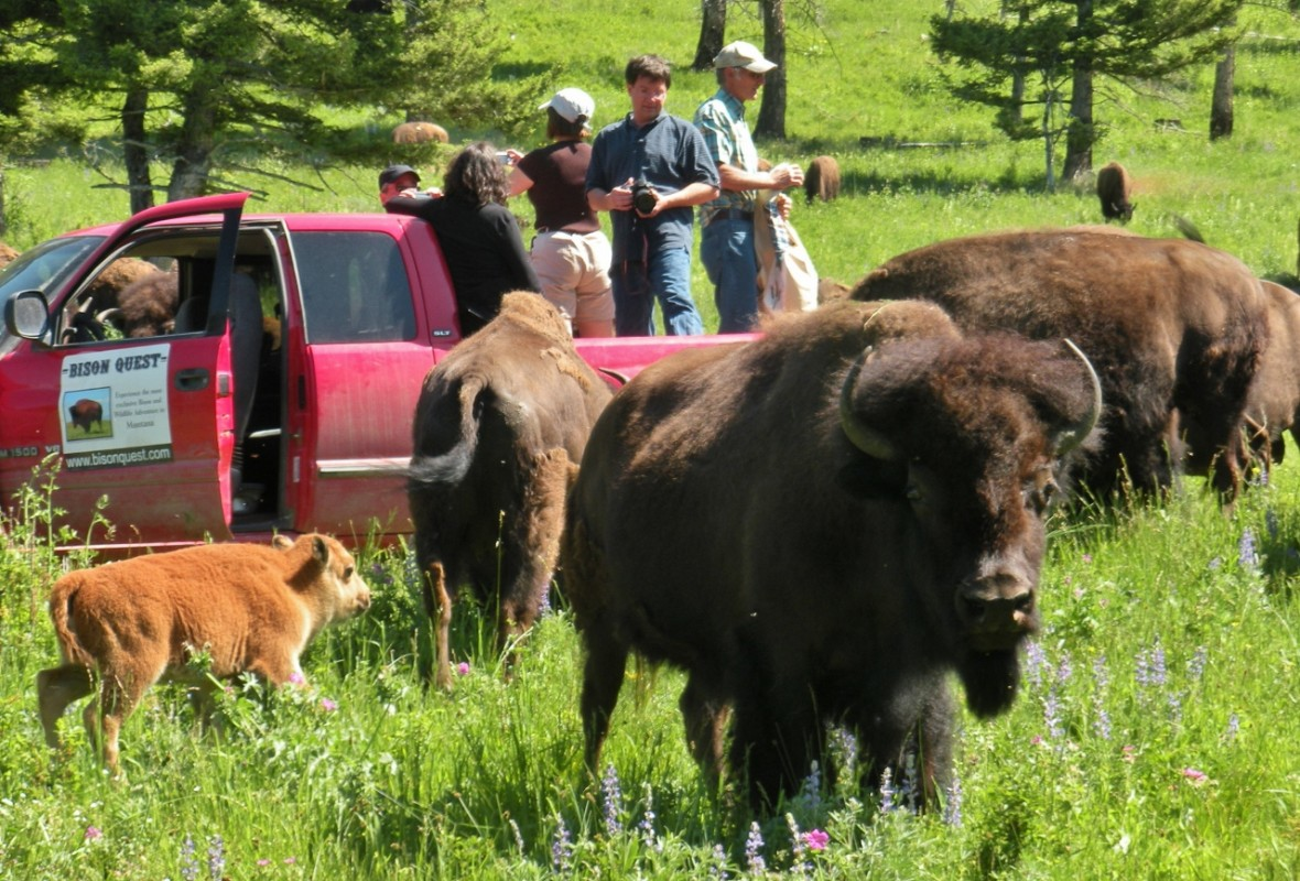 BisonQuest Wildlife Vacations Discount: 5% off Safari