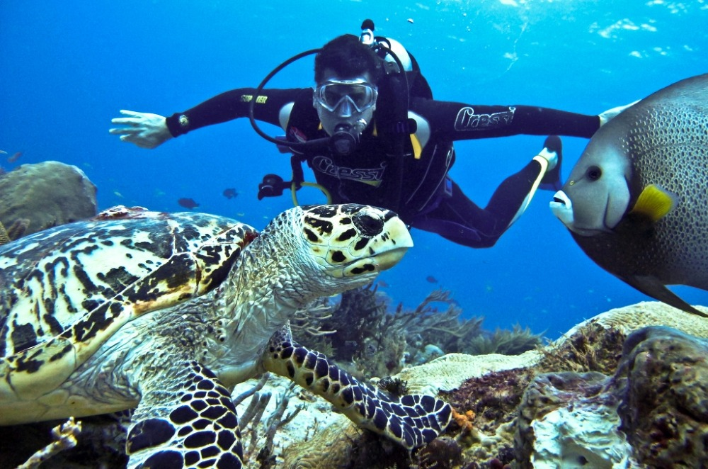 View Andaman Tours and Travels Discount: 5% off Scuba Diving